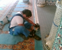 Der Teppich 3